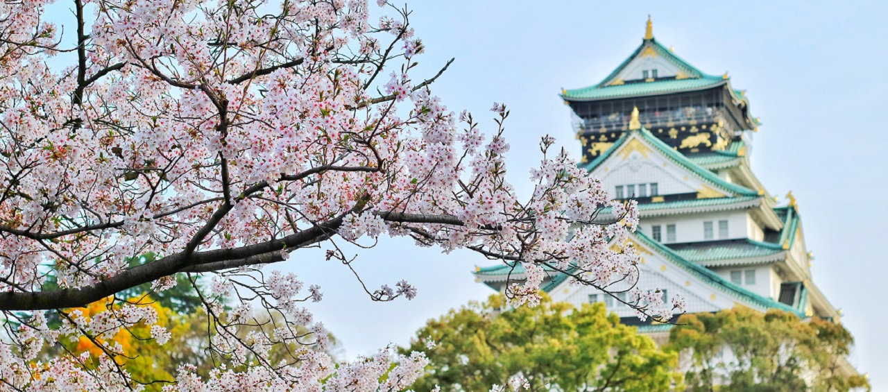 Cherry Blossom Tours Japan, Japan Cherry Blossom Tour, Cherry Blossom Tours 2019, Cherry Blossom in Japan