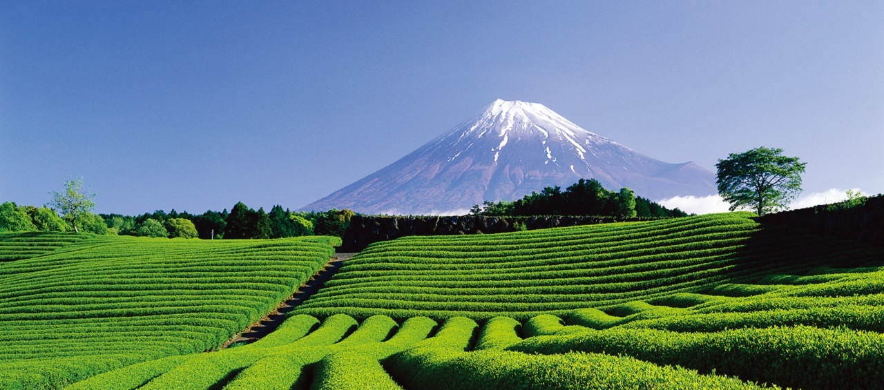 Scenic Tours in Japan  - Enjoy the breathtakingly beautiful sceneries of the land of the rising sun.