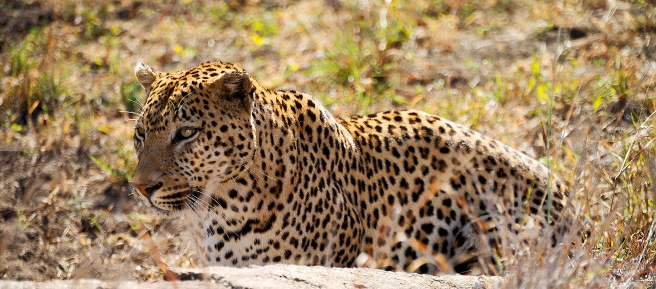Wild life Tours in Sri Lanka - Explore the exotic wilds of an island home.